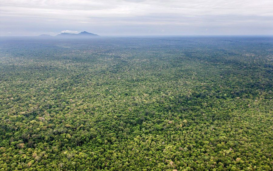 Aerial view of Cambodia's Prey Lang forest (Winrock International)