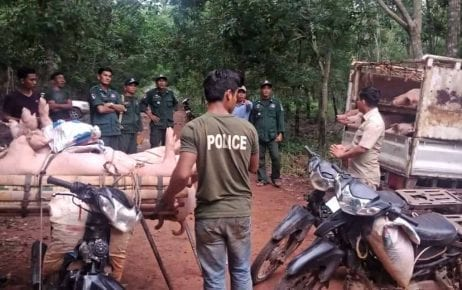 Police arrest hog smugglers in Tbong Khmum province earlier this month. (Supplied)