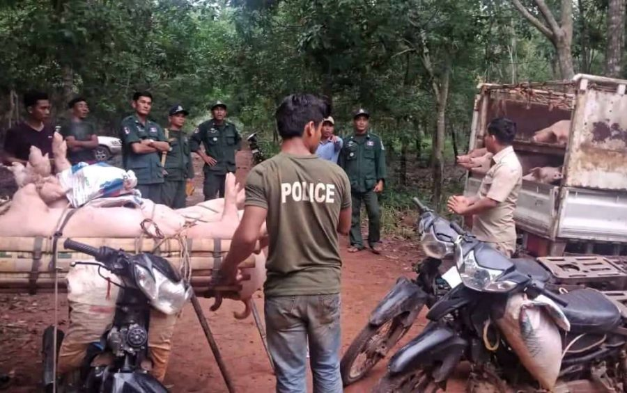Police arrest hog smugglers in Tbong Khmum province earlier this month. (Supplied)
