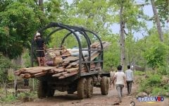 All Timber-Carting Trucks, Motorbikes to Be 'Destroyed'