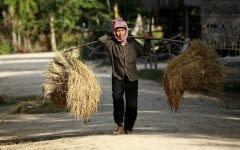 Drought, Poor Rice Harvest Signs of Climate Change in Southeast Asia