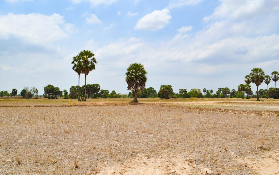 Fields devastated by drought in Takeo province in April 2019 (Kelsea Clingeleffer/UNDP Cambodia)