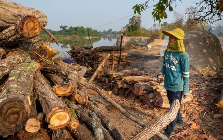 A villager prepares wood for charcoal production. (UNDP)