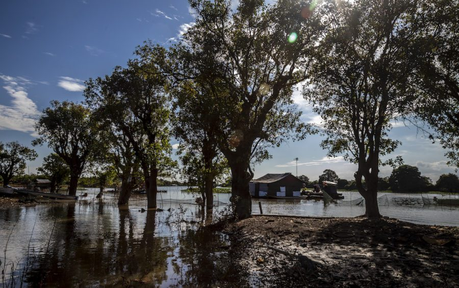 Most of the forests surrounding the Tonle Sap lake are dry in December, although a few are still flooded, as seen on December 17, 2019 in Siem Reap province's Treay village. (Roun Ry)