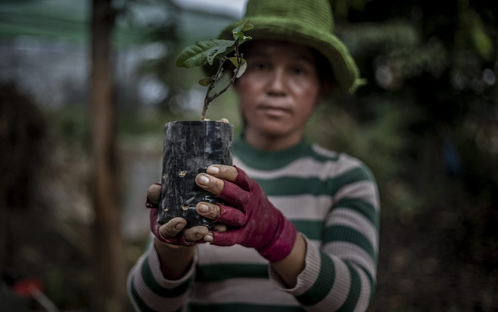 A woman holds up a neang sapling she potted in Siem Reap province's Kralanh district on December 18, 2019. If well maintained, the new trees might become a carbon capture site that can generate conservation funds for Cambodia. (Roun Ry)
