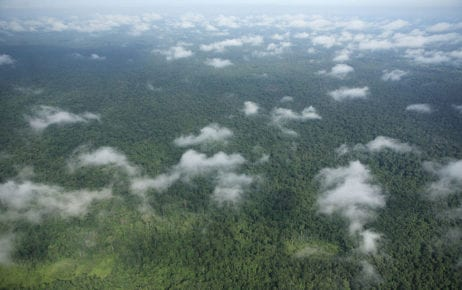 View of the Prey Lang forest in July 2008 (Prey Lang Community Network)