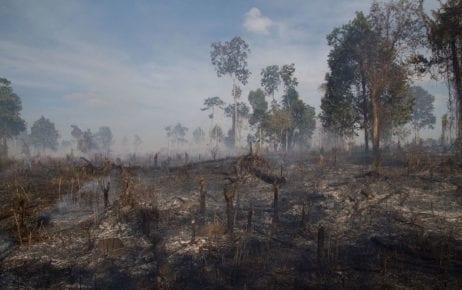 Illegal deforestation near Sen Monorom in Mondulkiri province in January 2014 (Christian Pirkl/Wikimedia Commons)