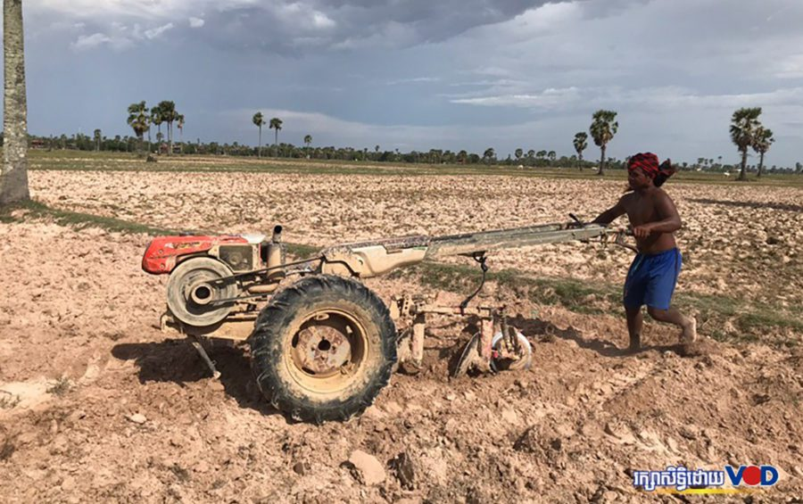 A farmer in Kampong Cham province's Batheay district ploughs his rice field under the sun on June 6, 2020. (Kong Meta/VOD)