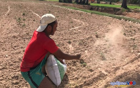 A farmer in Kampong Cham province's Batheay district sows rice seeds in his parched rice field on June 6, 2020. (Kong Meta/VOD)