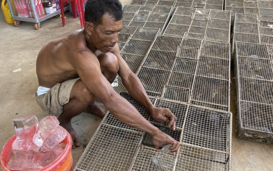 Rat broker Lor Sam Ath places pieces of ice in the cages to allow the rodents to hydrate as they make their way across the border to Vietnam. (Ananth Baliga/VOD)