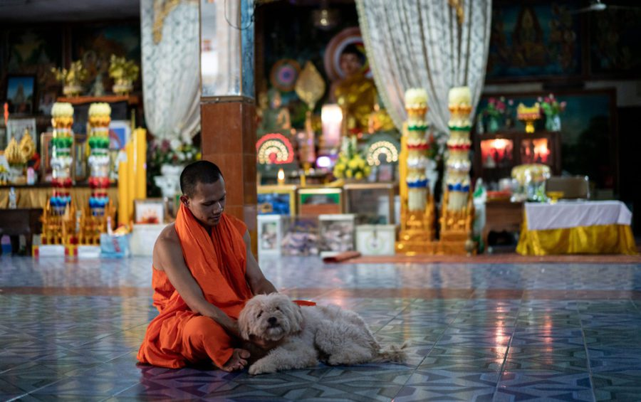 A monk at a pagoda in Phnom Penh with a community-owned dog. Unwanted pets are often abandoned at pagodas, frequently becoming a collective responsibility. (Andy Ball/VOD)
