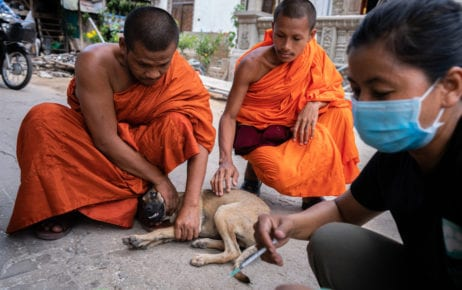 Monks at a pagoda in Phnom Penh hold a dog as it receives the rabies vaccine during a vaccination drive conducted by Animal Rescue Cambodia staff. (Andy Ball/VOD)