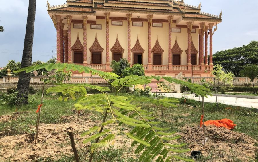 Newly planted trees at Wat Pothivong in Prey Veng province's Svay Antor commune on September 1, 2020, three days after Kem Sokha visited the pagoda. (Matt Surrusco/VOD)