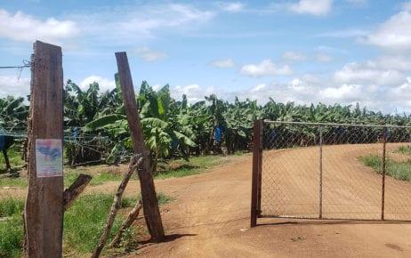 The entrance to TBYB Angkor Banana, a nearly 3,000-hectare plantation in Stung Treng province's O'Svay commune, which grows bananas for export, on September 23, 2020. (Danielle Keeton-Olsen/VOD)