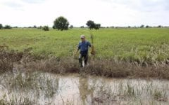 Farmers Fear Loss of Rice Harvests as Flooding Deaths Rise to 21