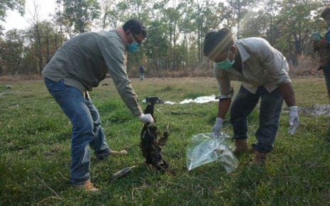 Community rangers dispose of a poisoned giant ibis in Chheb Wildlife Sanctuary, Preah Vihear province on April 14, 2020. (Wildlife Conservation Society)