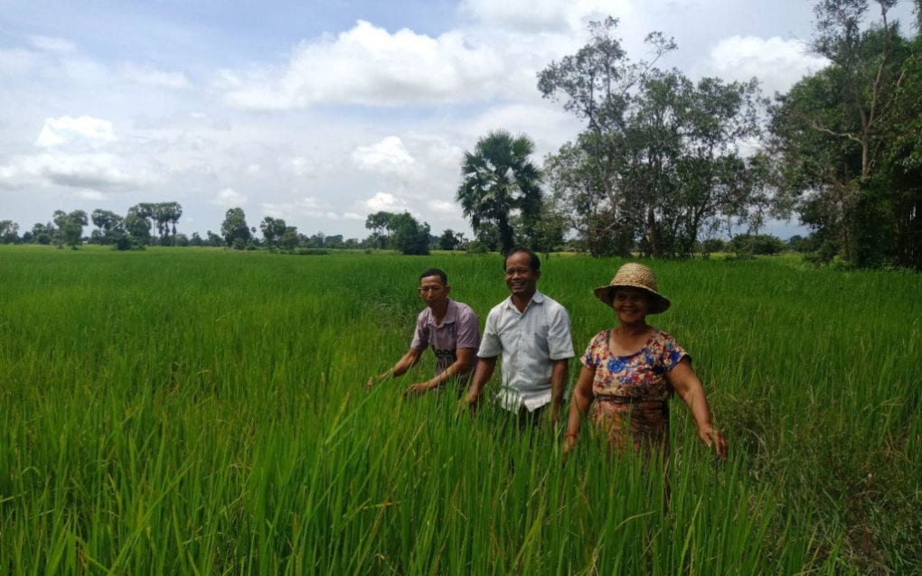 Mae Mon, center, stands in rice fields in Siem Reap province's Khnar Po village. (Impact Explorer)
