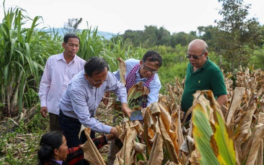 CNRP co-founder Kem Sokha, left, and GDP co-founder Yang Saing Koma, center, pick crops during a visit to a farm in Pursat province in November 2020, in this photograph posted to Saing Koma's Twitter page.