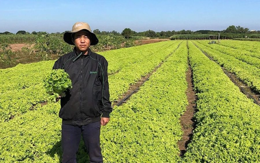 A farmer poses with his lettuce crop at his farm in Kandal province's Sa'ang district. (Supplied)