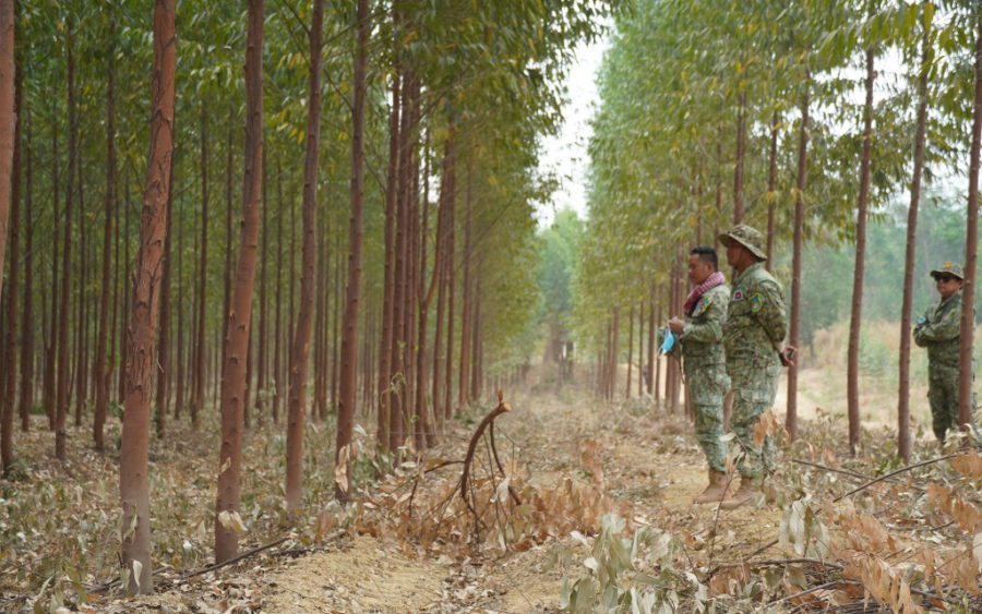Rangers in the Think Biotech plantation near the Prey Lang Wildlife Sanctuary, in Kratie province on February 15, 2021. (Tran Techseng/VOD)
