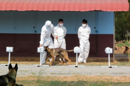 Trainers walk a dog through scent traps to train dogs raised for demining to find Covid-19 patients, in a photo posted to the Cambodia Mine Action Center's Facebook page on April 1, 2021.