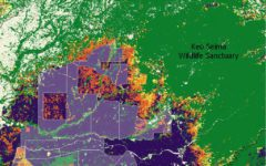 Satellite Data Shows Deforestation of Protected Areas Near Concessions