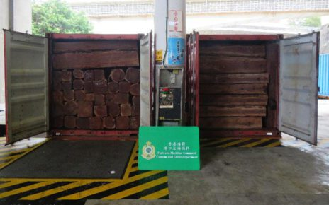Logs of an 'endangered species' seized in Hong Kong after arriving in containers from Cambodia. (Hong Kong Customs)