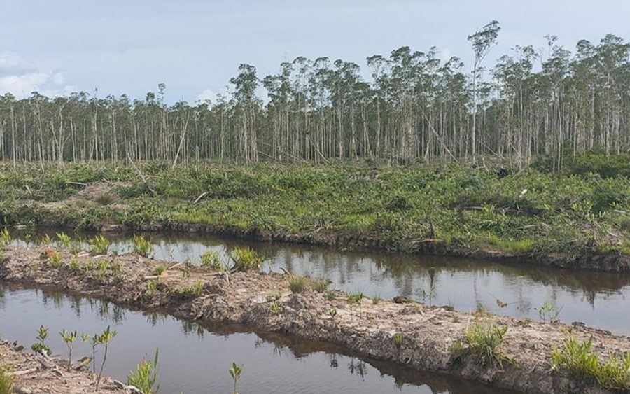 Cleared forest in Koh Kong province's Dang Peng multi-use protected area, in a photo taken on July 4, 2021 and supplied by a local resident.
