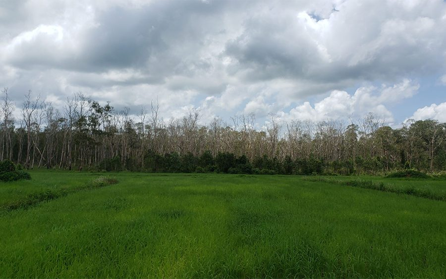 A rice field leads into the flooded forest in Koh Kong province's Chi Khor Krom commune, an area that residents say has been riddled with disputes with neighboring sugar concession, on June 29, 2021. (Danielle Keeton-Olsen/VOD)