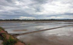 Another Push for Lucrative Kampot Coastland to Remain Salt-Producing