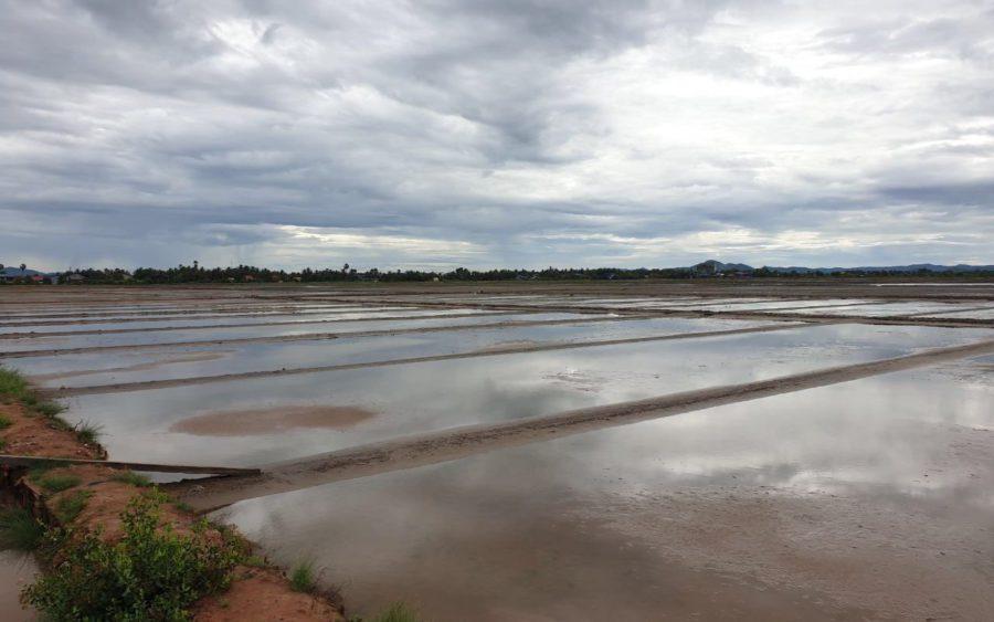 Salt fields in Kampot province in August 2021. (Mech Dara/VOD)